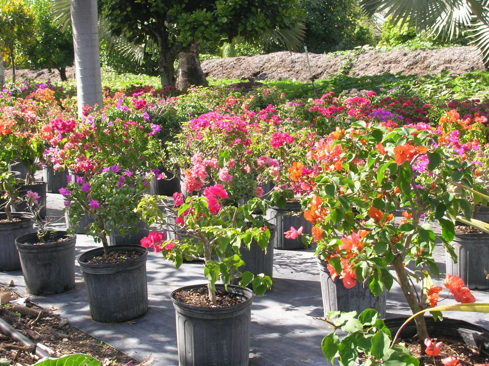 Nursery Plants Miami Fl Best Idea Garden