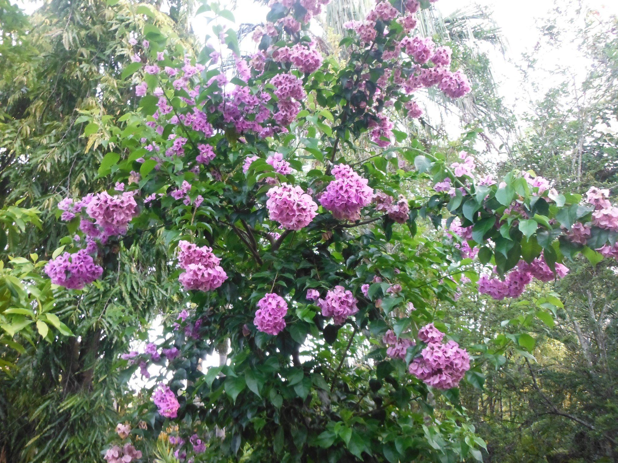 Transplanting Trees and Shrubs - Richard Lyons Nursery, Inc.