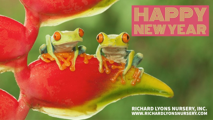 Happy New Year 2019. Photo of two frogs on a flower.